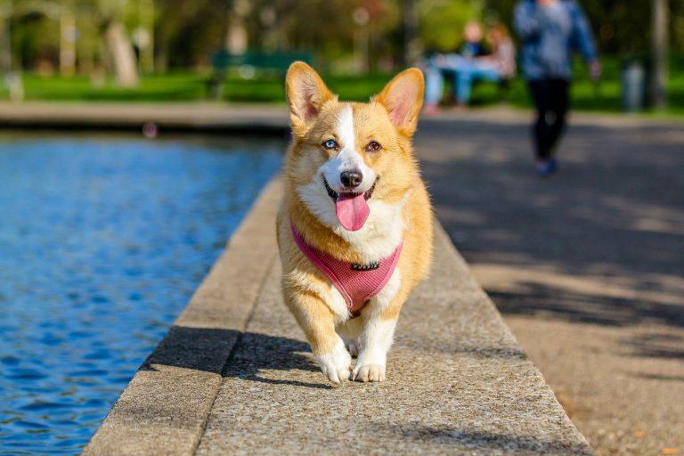 Glad hund på promenad